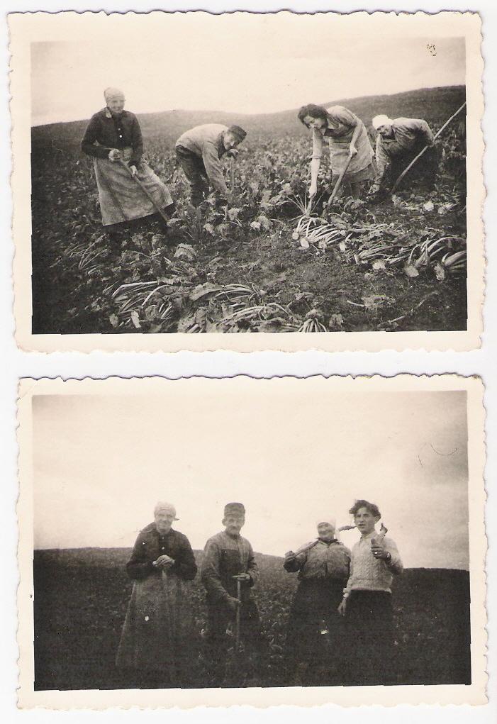 Selfkänter bei der Feldarbeit